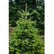 Weihnachtsbaum 1A Premium-Qualität Höhe ca. 1,10 Meter