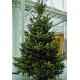 2,70-2,80 Meter Weihnachtsbaum 1A Premium-Qualität